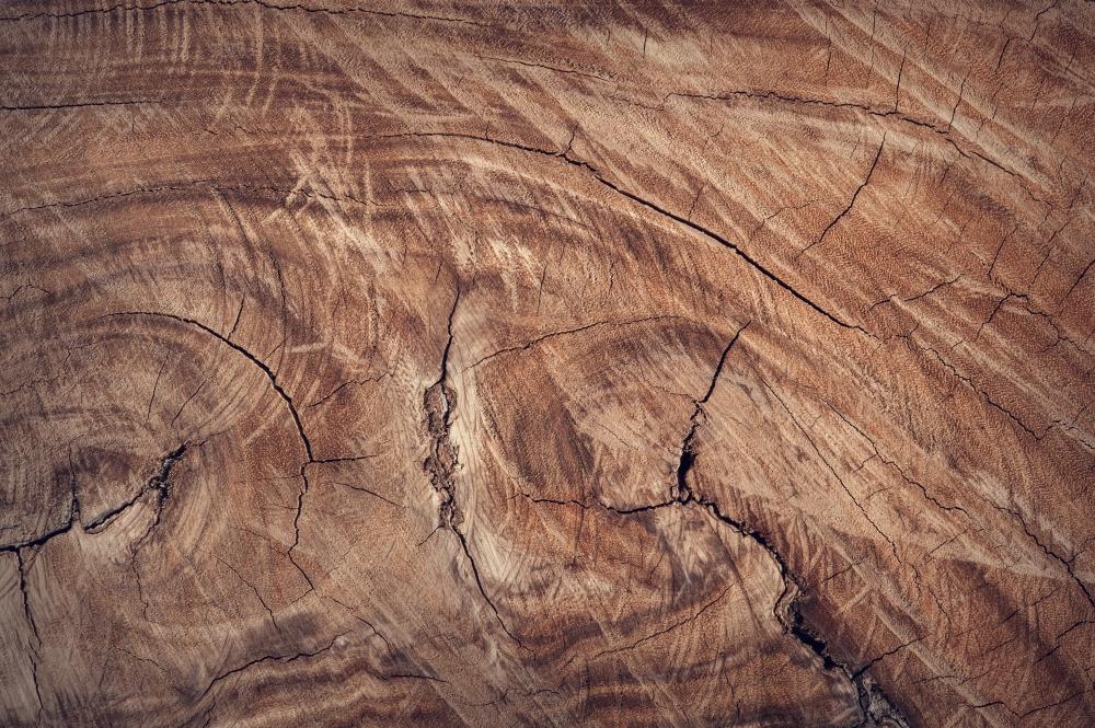 Jakie drewno na meble wybrać?
