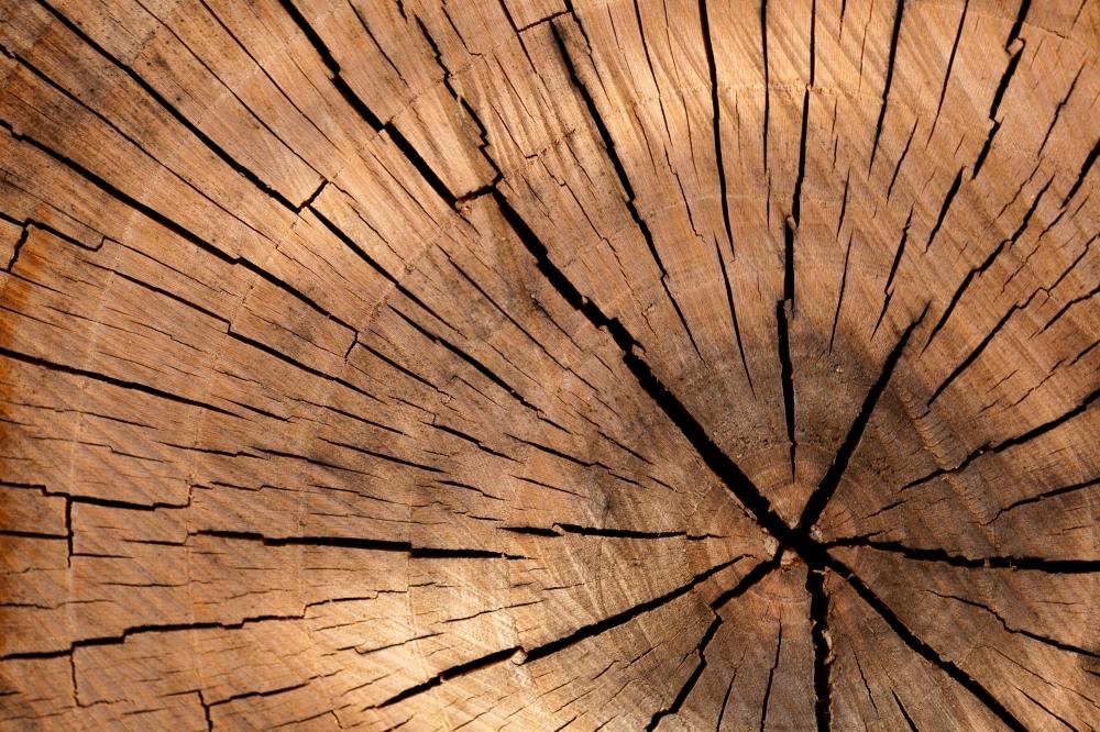 Właściwości drewna – fizyczne i mechaniczne
